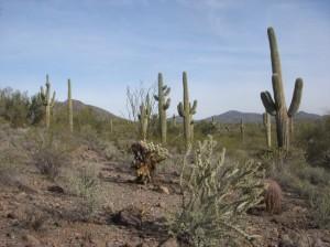 Arizona-Quail-Country-1024x768