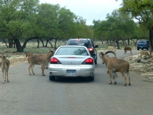 1-wildlife-ranch-cars-300x225